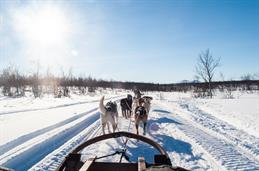 A White winter landscape, clear blue sky. A view upon several Dogs, that are pulling the sleigh.